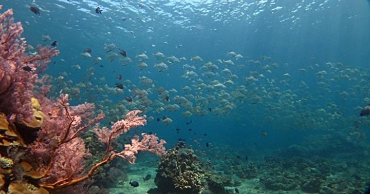 バリ島 アメッド ダイビング