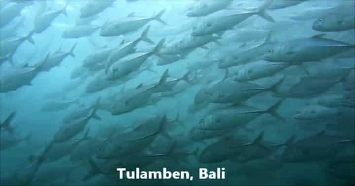 バリ島ダイビングトランベン:ギンガメトルネード