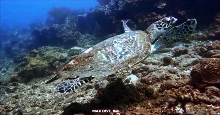 バリ島で友達と一緒に体験ダイビングとファンダイビング