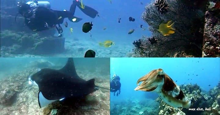 3日間バリ島でダイビング