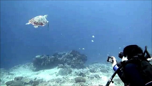 バリ島ヌサペニダでダイビング,ウミガメ