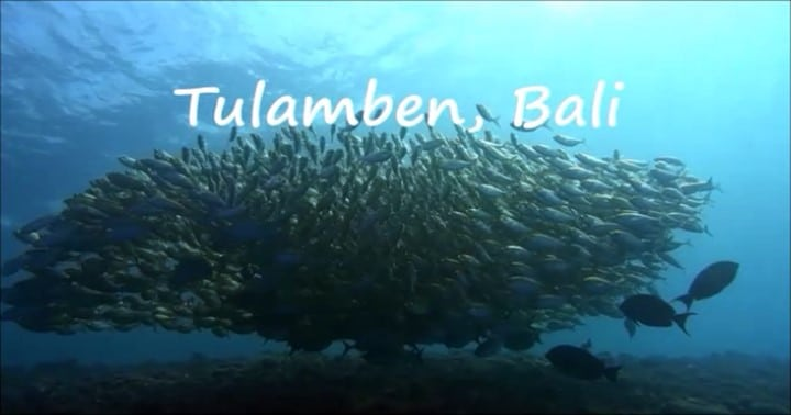 バリ島トランべ・テルメアジの群れ