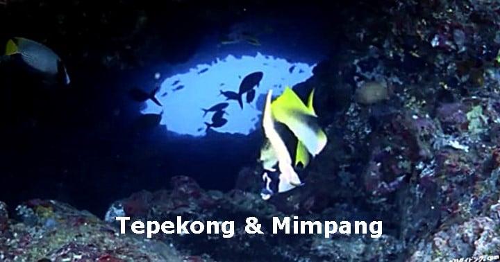 バリ島ダイビング テペコン