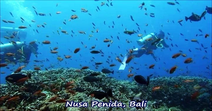 バリ島ダイビング,ヌサペニダ