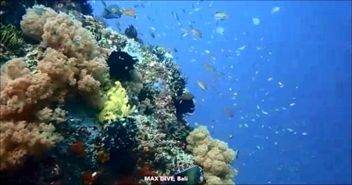 バリ島ミンパン&テペコンでダイビング