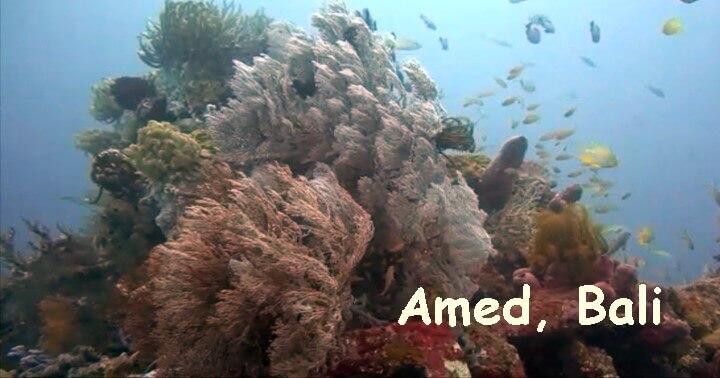 バリ島アメッドでダイビング