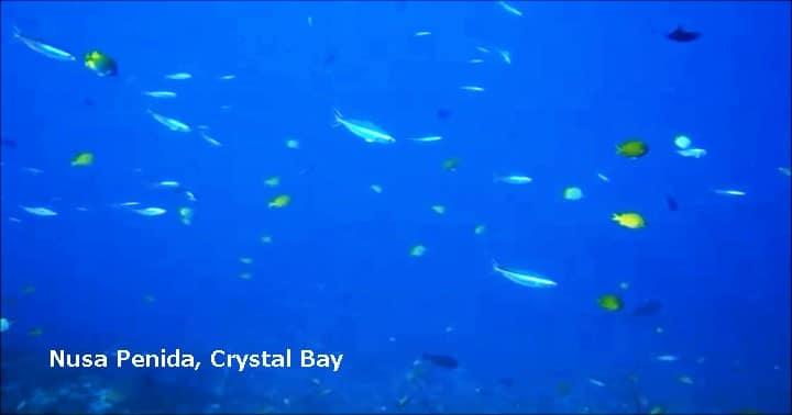 バリ島ヌサペニダ,クリスタルベイ