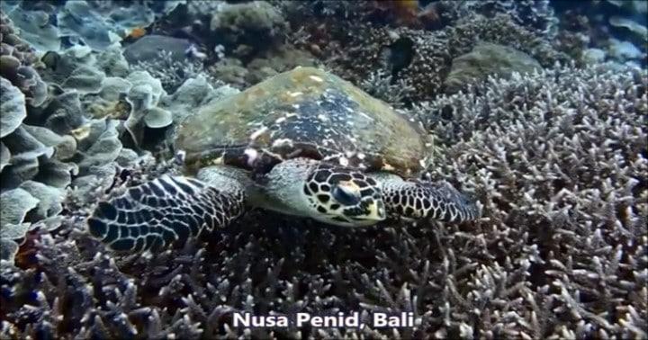 バリ島ヌサペニダでダイビング