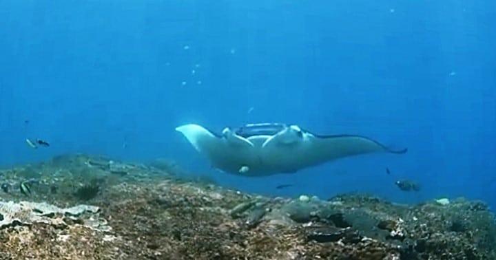 バリ島ヌサペニダ,マンタポイント