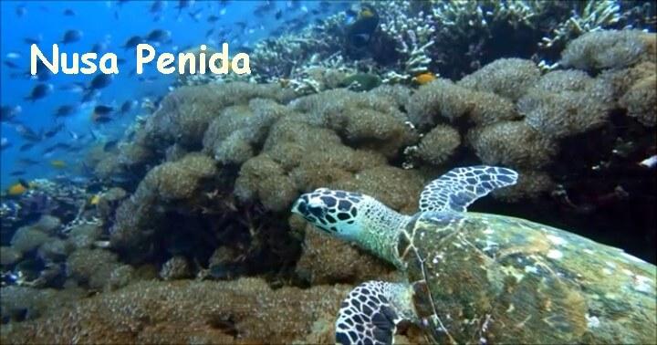 バリ島ダイビング:ヌサペニダ:SDポイントのカメ