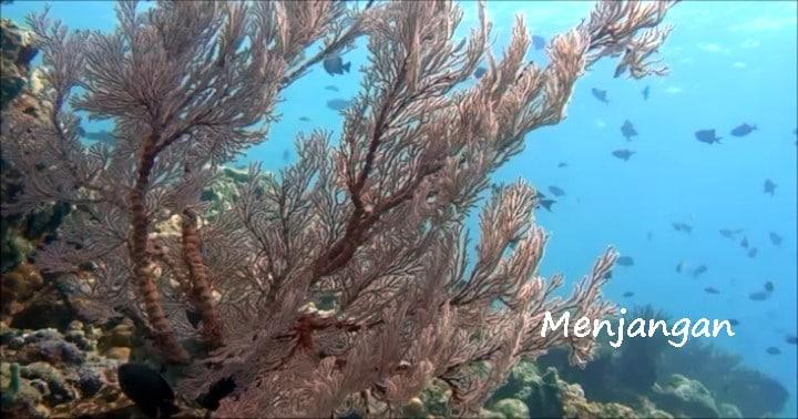 バリ島ダイビング,ムンジャンガン,pos2