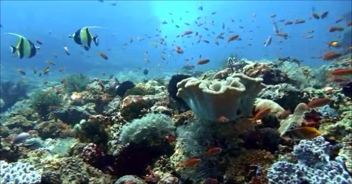 バリ島ダイビング、テペコン島