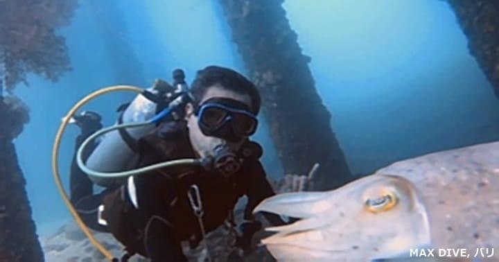 コブシメとgo proセルフィ―,バリ島パダンバイ