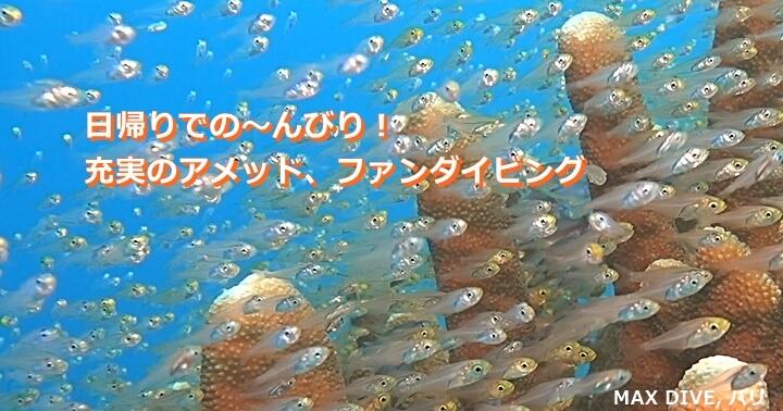 キンメモドキの群れ,バリ島アメッド