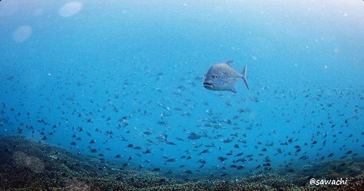 バリ島ダイビング:ヌサペニダ