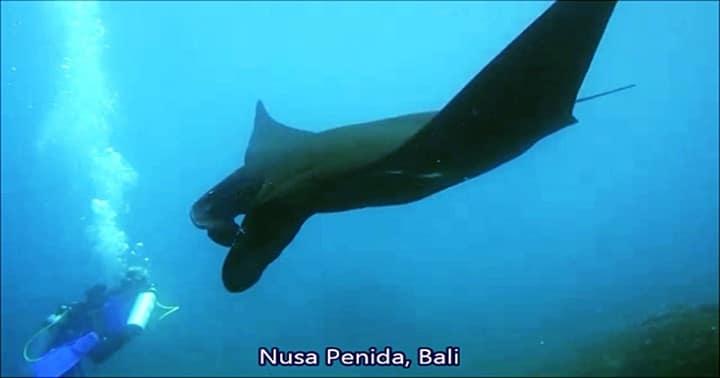 bali nusa penida, manta point fun diving