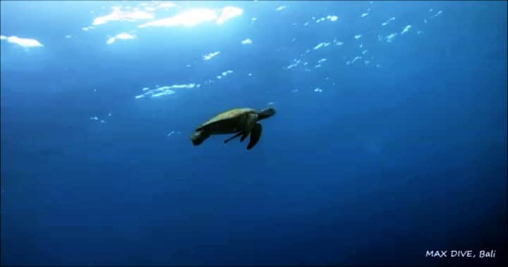 bali nusa penida turtle