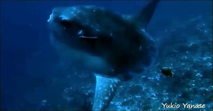 バリ島ヌサペニダでマンボウダイビング