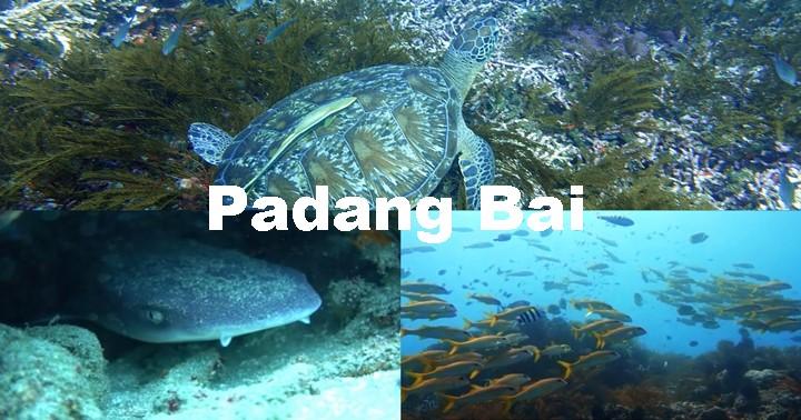 バリ島ダイビング、パダンバイ