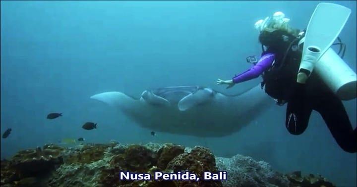 バリ島ヌサペニダで沢山のマンタとウミガメ、美しいサンゴのダイビング