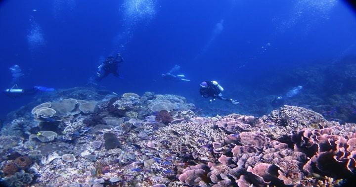 gorontalo blue