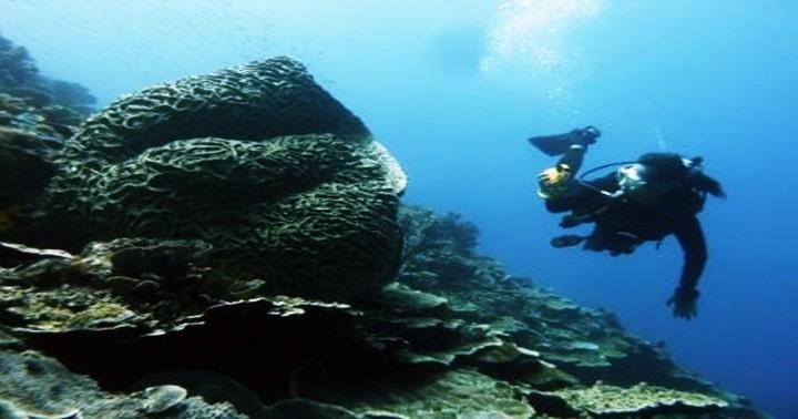 honeycomb dali sponge