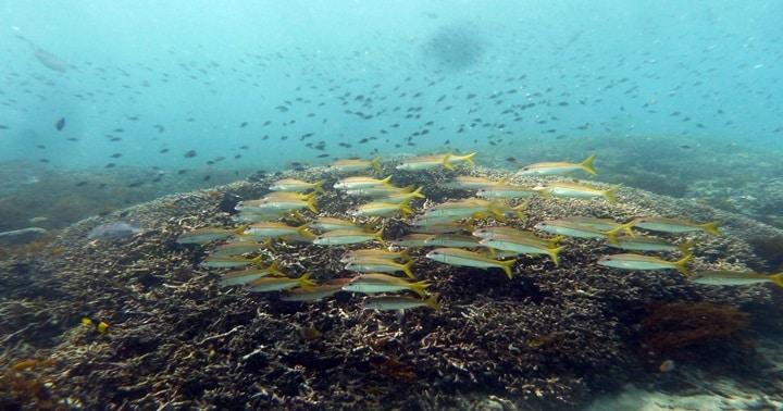 padangbai coral