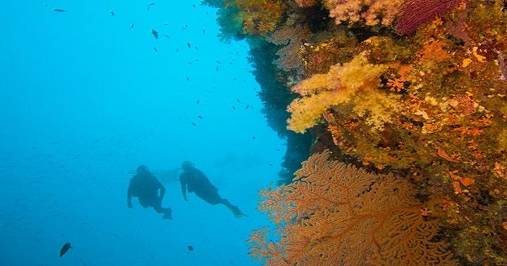 safe-dive
