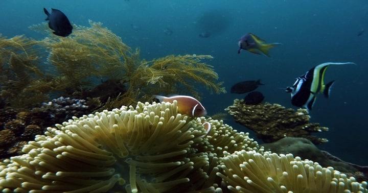tulamben coral